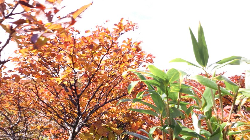 10月3日東栗駒山コース