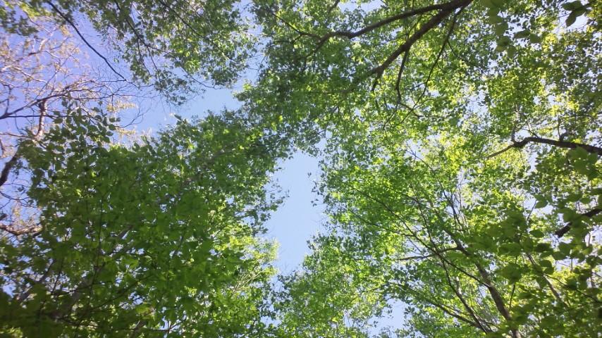 新緑の世界谷地とブナの原生林
