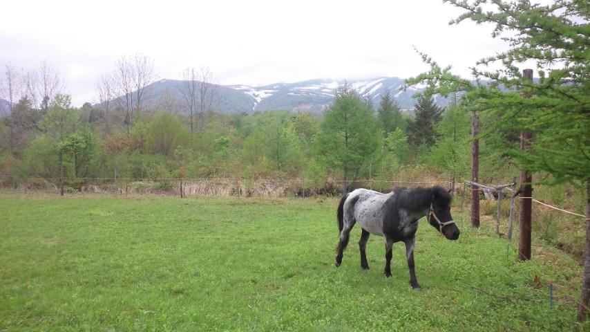 栗駒山と馬