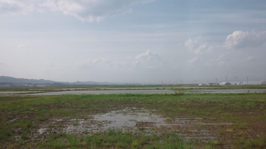 山元町の田んぼ